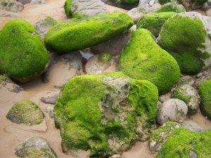 ¡Qué maravilla de verde!